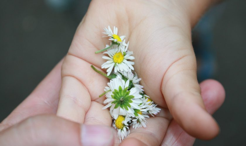 Herbs and Children's Health