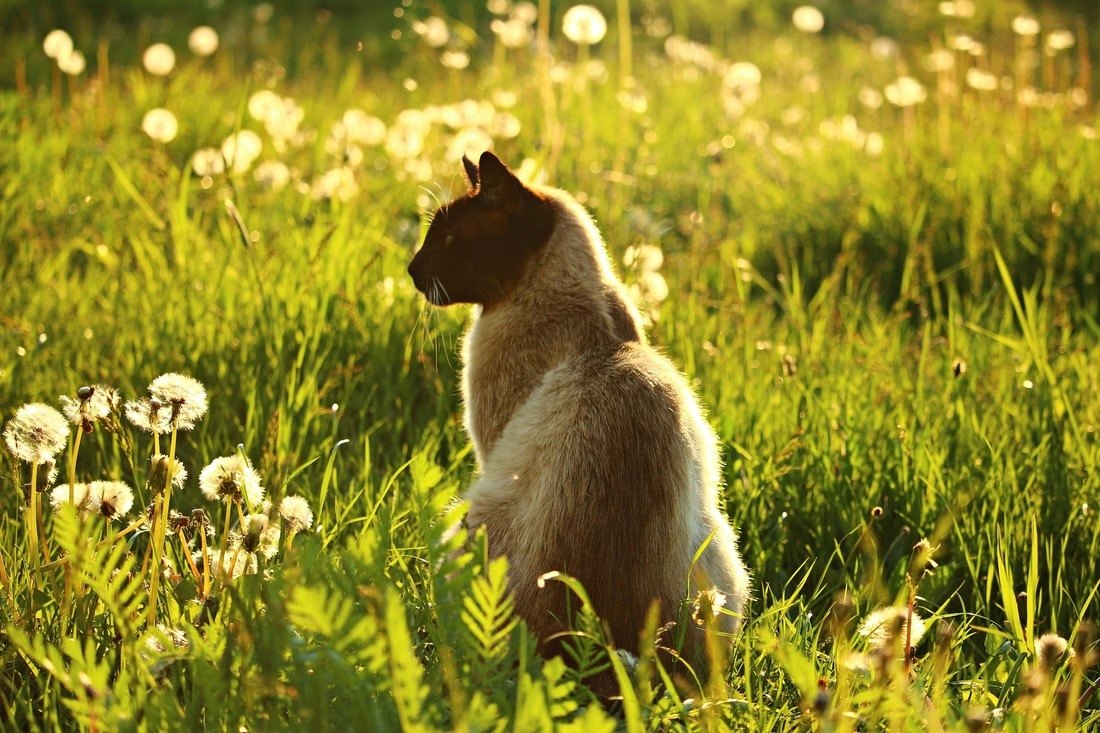 Herbal Safety for Cats and Dogs