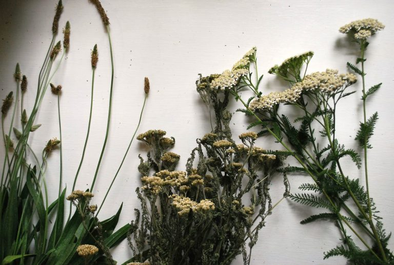 3 Reasons to Use Dried Herbs Instead of Fresh