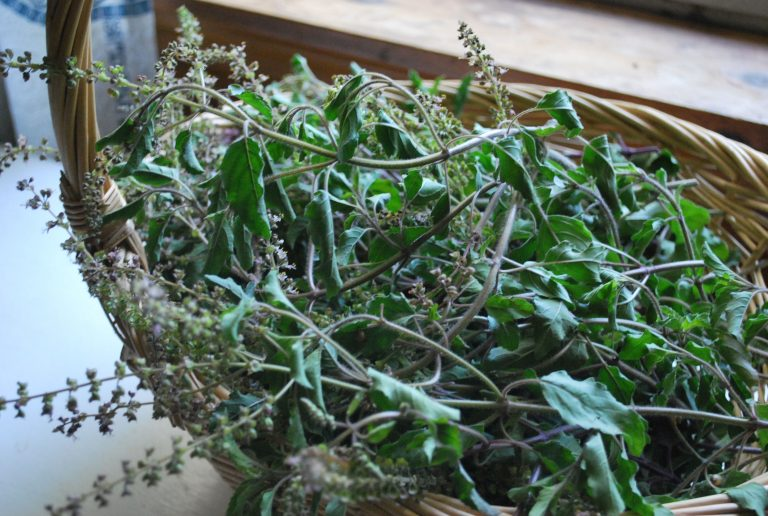 3 Adaptogens That Will Thrive in Your Herb Garden