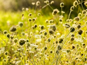 Tips for Fall Herb Gardening