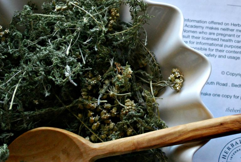 Why Studying Herbal History Makes Us Better Herbalists