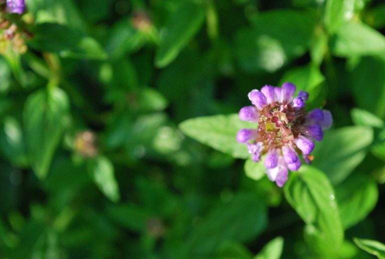 Self Heal and Herbal First Aid