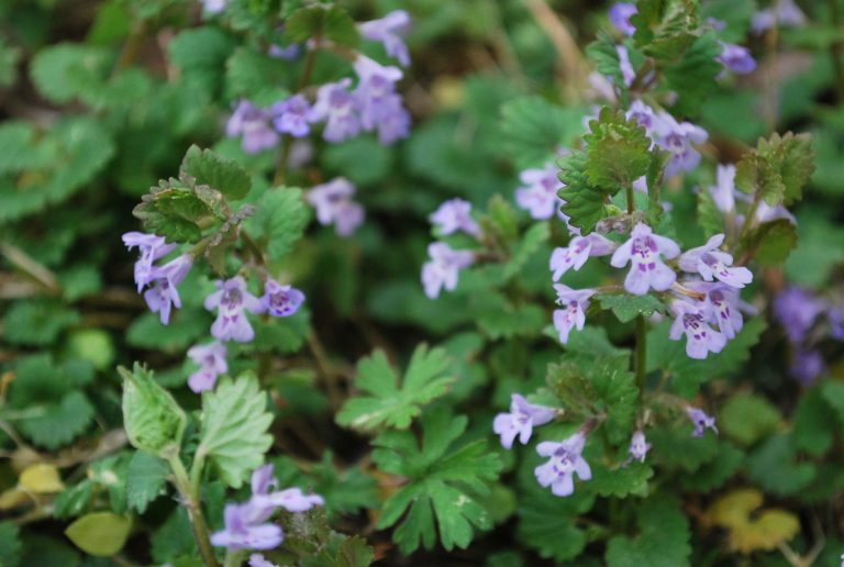 Allergy Season Problem Solving with Herbs