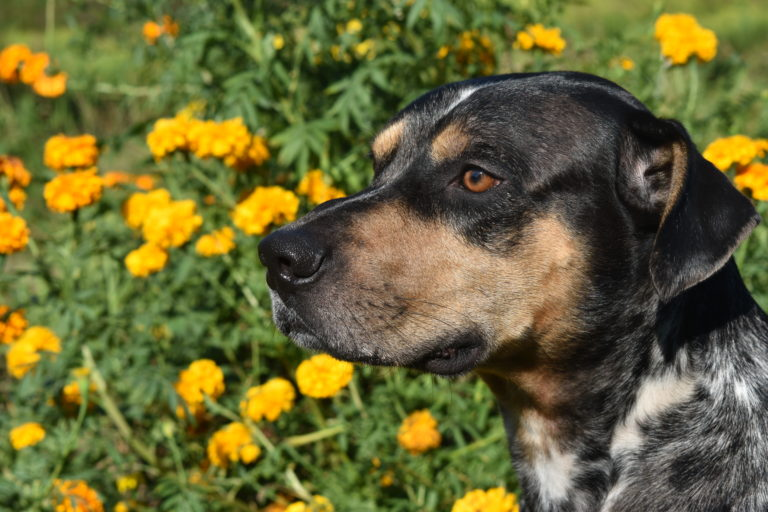 Tips and Tricks for Giving Herbs to Dogs