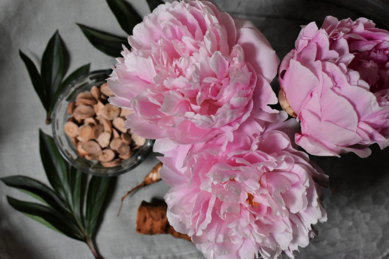 Peony Root and the Immune System